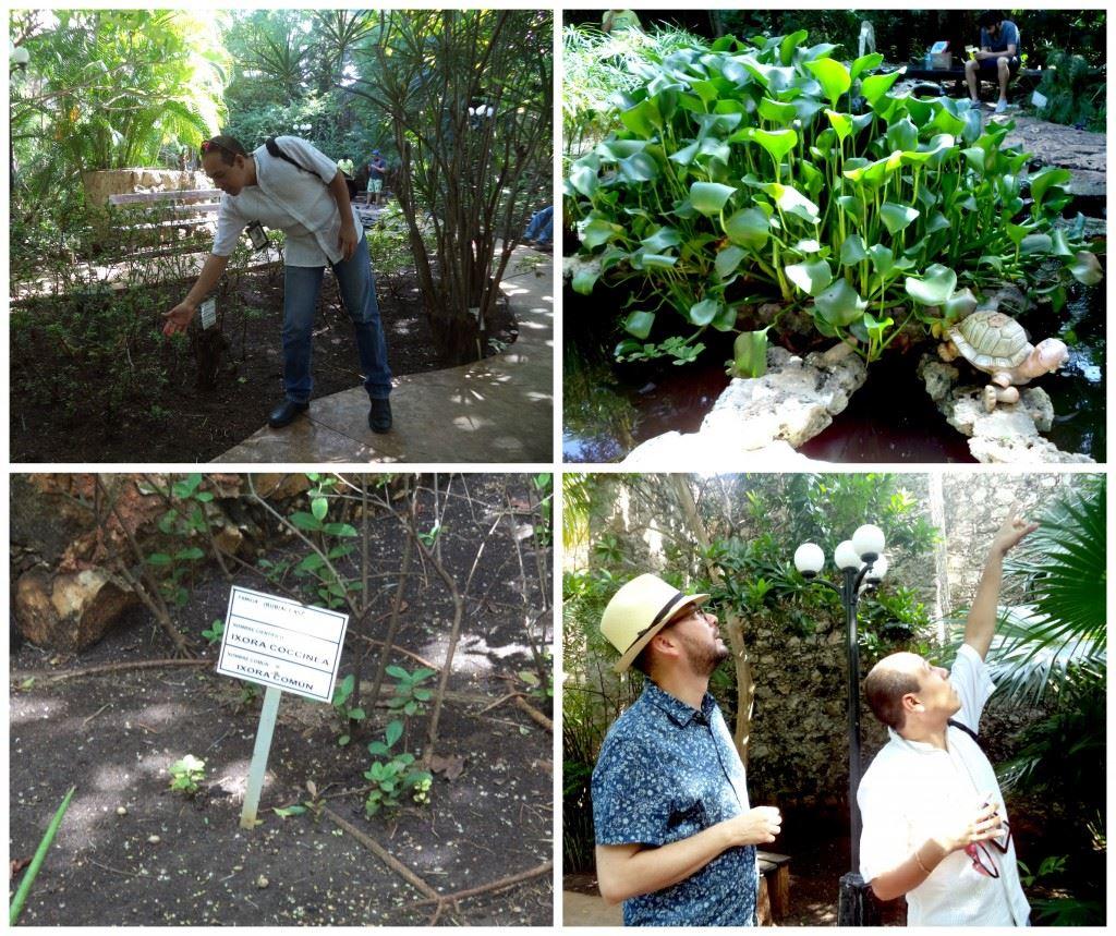 Descubre los secretos del jard n bot nico xmuch 39 halt n en for Jardin botanico horario