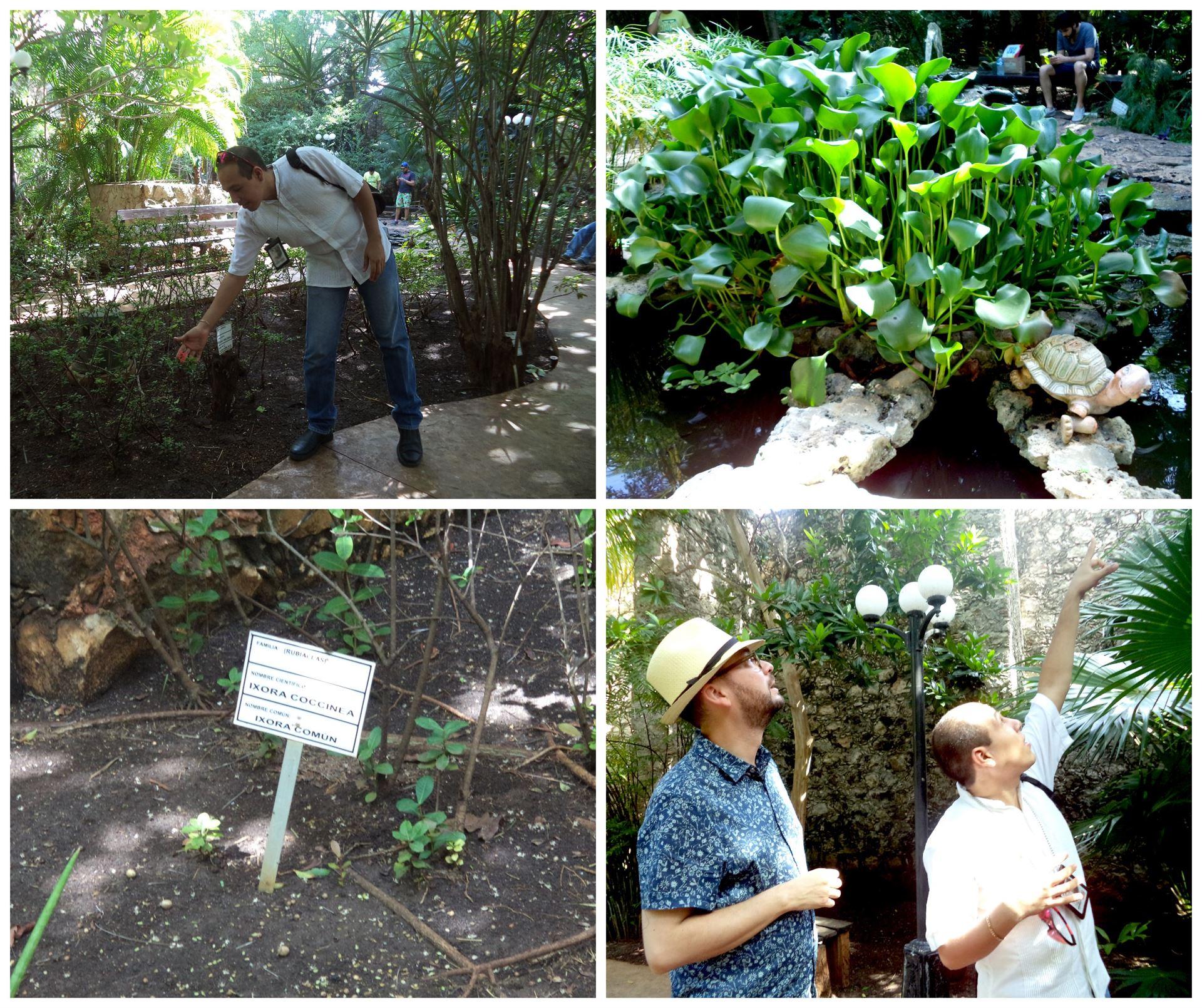 Descubre los secretos del jard n bot nico xmuch 39 halt n en for Jardin botanico xmuch haltun