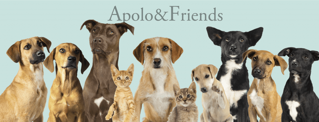 Apolo&Friends_Protección Animal_Reportaje_Blog_Lolina Rivas